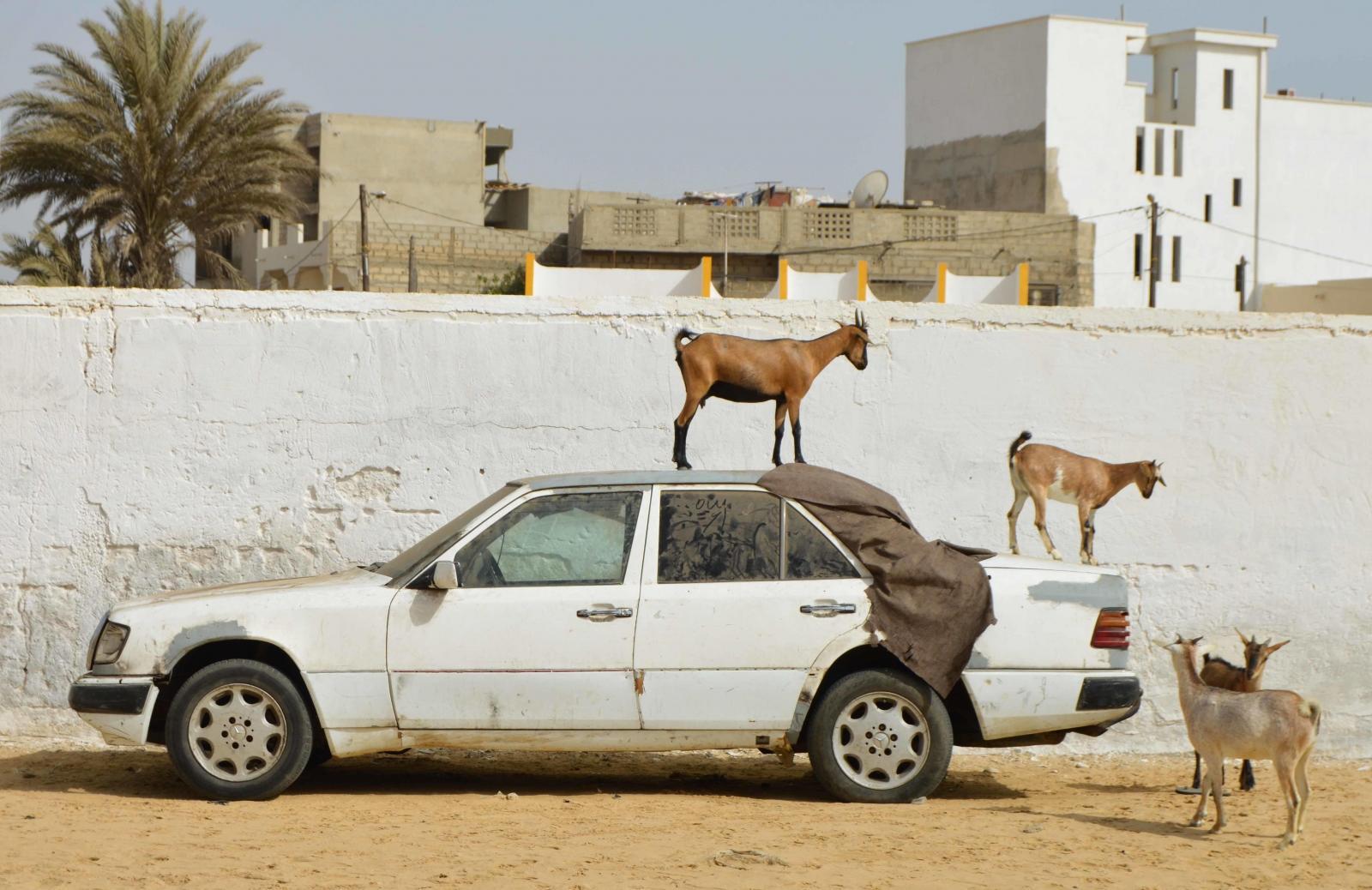 Un paisaje senegalés poco común para nuestros voluntarios, lo que puede causar choque cultural